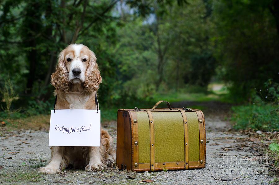 perros y maletas