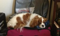 mascotas en maletas
