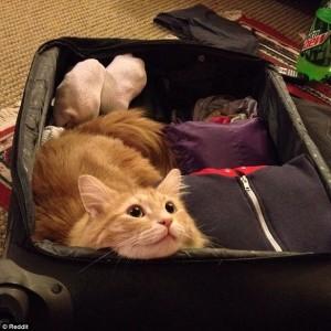 animal doméstico viaje