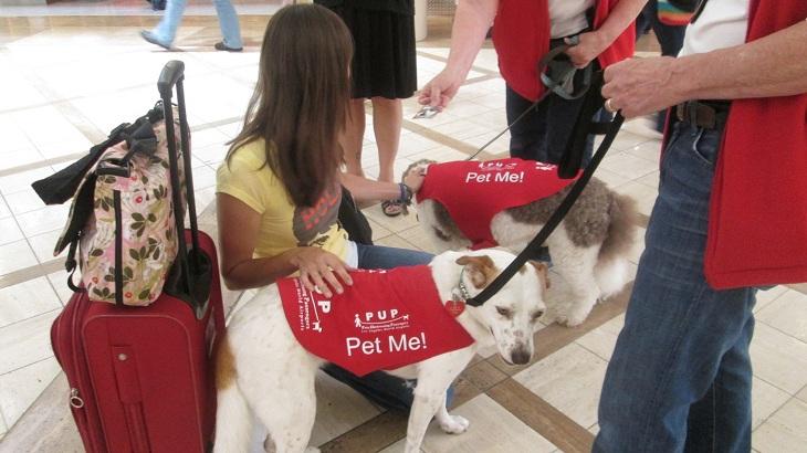 perros de terapia en aeropuertos